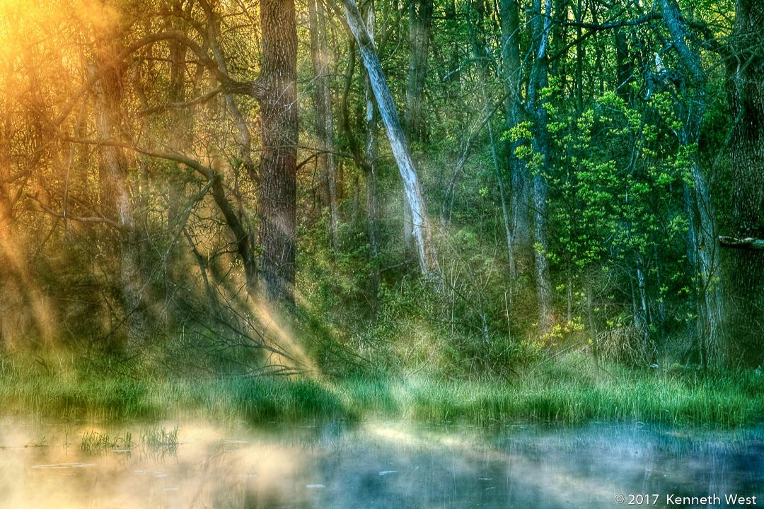 Forest Awakening - SP-004-S - Wetland Series - Standard 2 x 3 Proportion