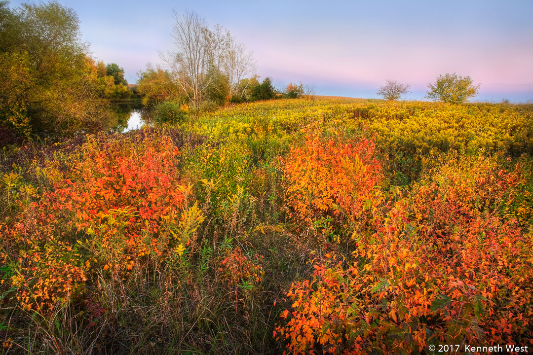 Field of Gold - FA-006-S - Native prairie remnant in Jefferson County Iowa  - Standard 2 x 3 Proportion