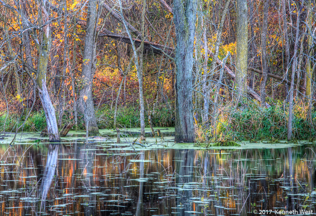 Wetland Serenity #2 - FA-019-S - Standard 2 x 3 Proportion