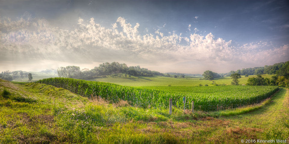 Summer Corn Field - LHKW-044-W - Orchard Ridge Loop, Harrison County, Loess Hills National Scenic Byway - Wide 1 x 2 Proportion